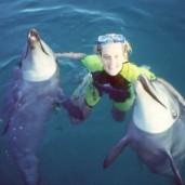 Lau+dolphins